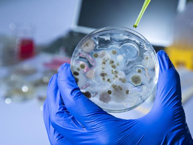 There are reports that South Korea's military have yet to build up enough stocks of the anthrax vaccine. Picture: iStock