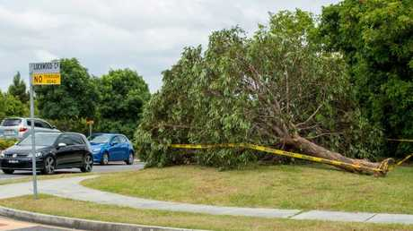 The tree the BMW hit before crashing into the Tritton family. Picture: Richard Walker