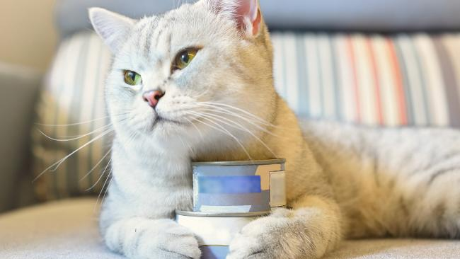 One person had cat food cans in their anus.