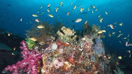 Raja Ampat is a hot spot for marine biodiversity.