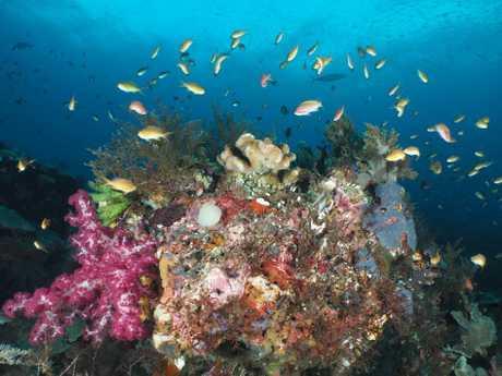Raja Ampat is a hot spot for marine biodiversity.