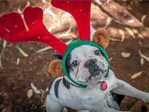 Darling Downs pets enjoy the Christmas spirit