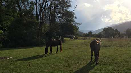 The horses graze around our campsite