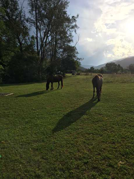 The horses graze around our campsite