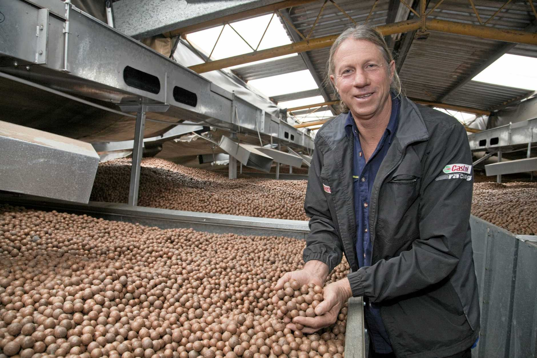 Trevor Steinhardt and his  family supply macadamias to the world.    Photo Contributed