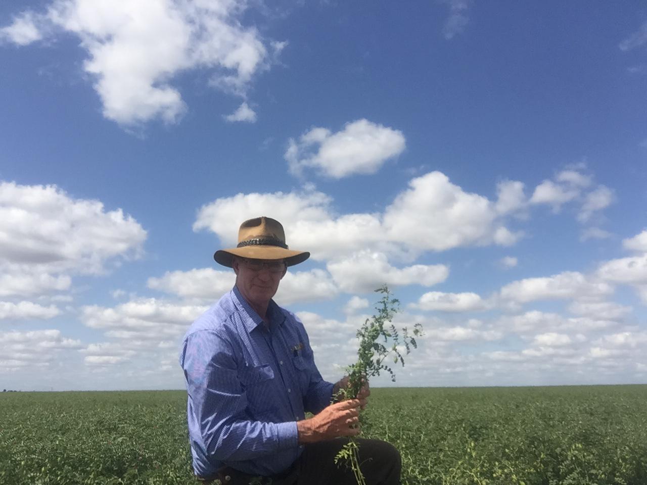 Pulse Australia Industry Development Agronomist Paul McIntosh