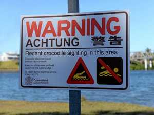 Croc spotted in Burnett River