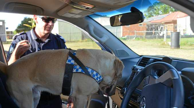 SNIFFER: Police dogs have been deployed to help with the fight against drug driving.