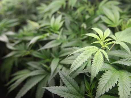 Recreational marijuana is now legal in California.