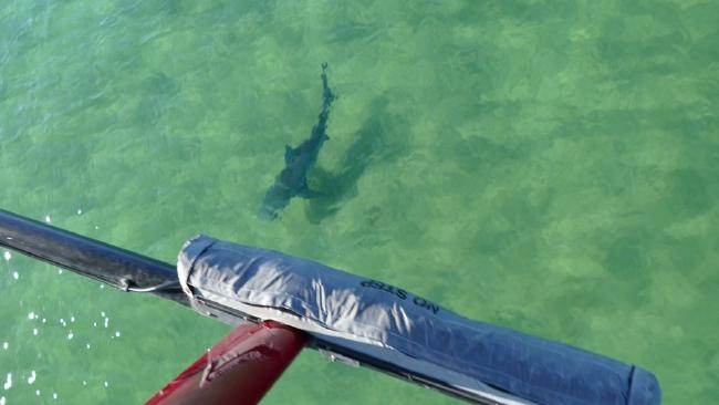 Swimmers faced a similar situation at Birubi Beach north of Newcastle. Shark Smart.