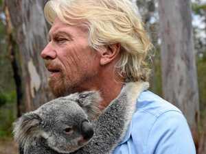 Groundbreaking study reveals secret life of our koalas