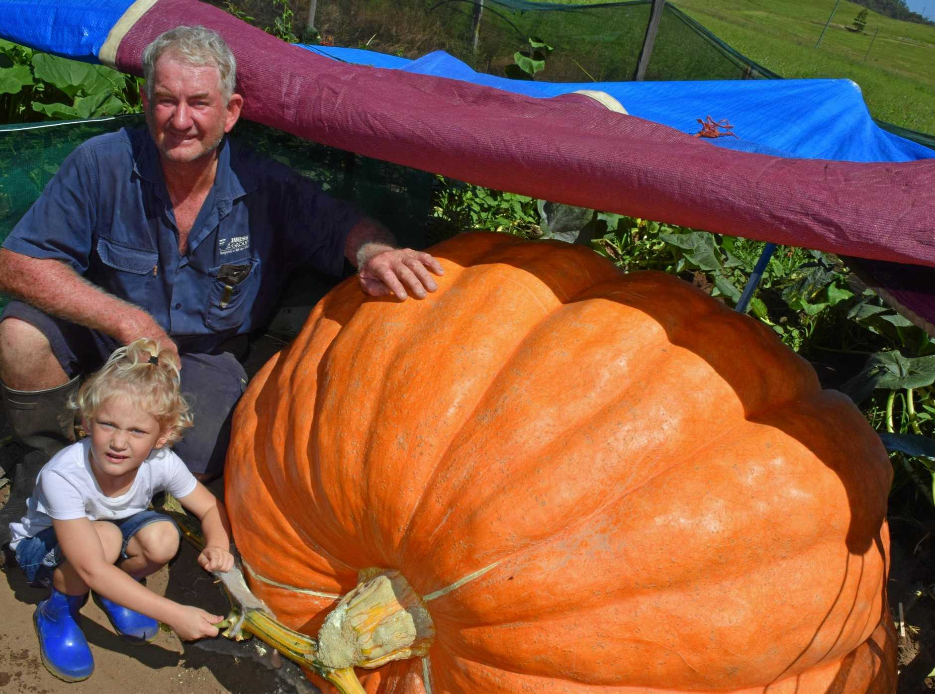 John Leadbeatter will enter his almost 600kg pumpkin into the Lismore competition on January 20. From left: John Leadbeatter and his granddaughter Serena Allen.