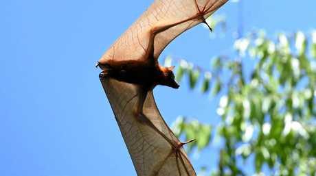Bats in Baldwin Swamp.