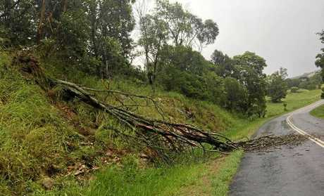 Trees have been downed in Wolvi and the Cedar Pocket area in a storm this afternoon.