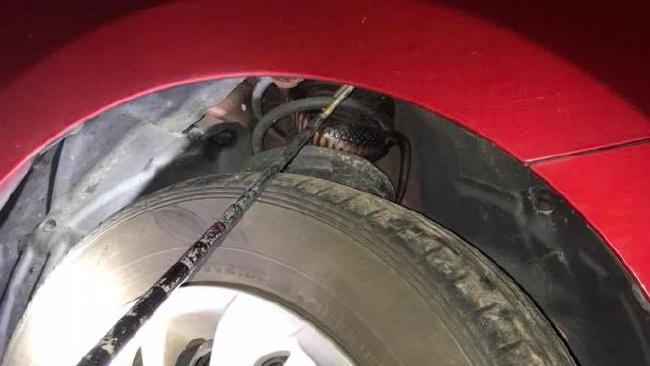 The red-bellied black snake curled up in different parts of the man's car