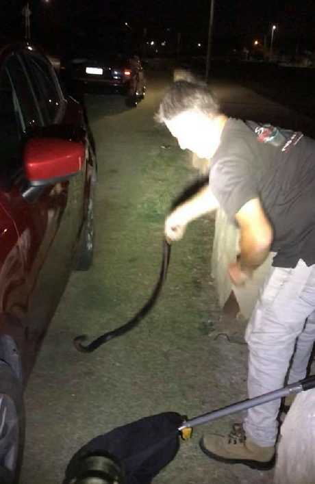 Finally the snake catcher was able to grab him