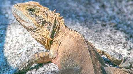 Some believe the eggs could have been laid by a water dragon. Picture: Nicoline Toepfer.