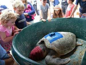Loggerhead Turtle Release