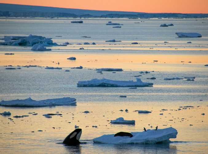 Images taken near Commonwealth Bay two years ago during Chimu Adventures expedition cruise to Antarctica.
