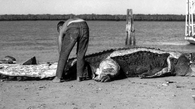 A hunter skins a 4.8m croc shot at Port Alma in 1963.