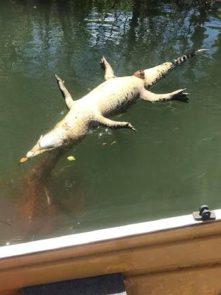Crocodile believed to have been caught in a crab pot, found dead on Johnstone River. Source: Facebook