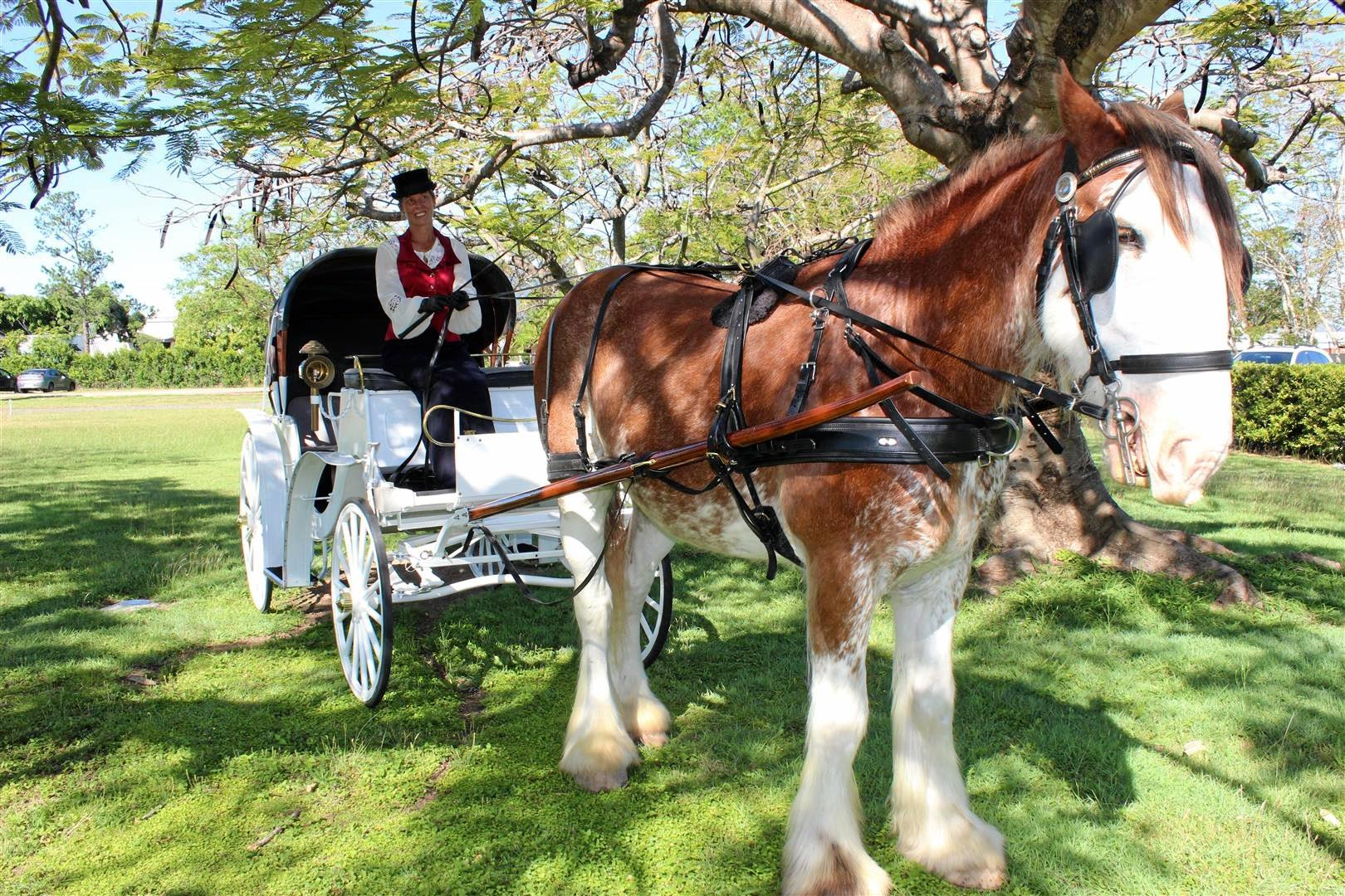 Kenny the Clydesdale will be offering horse-drawn carriage rides through Rockhampton CBD from tonight, October 7.
