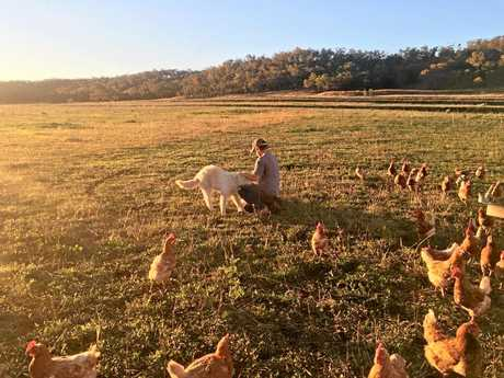 Randal Breen with the family's maremma, which guards the free range chicken flock.