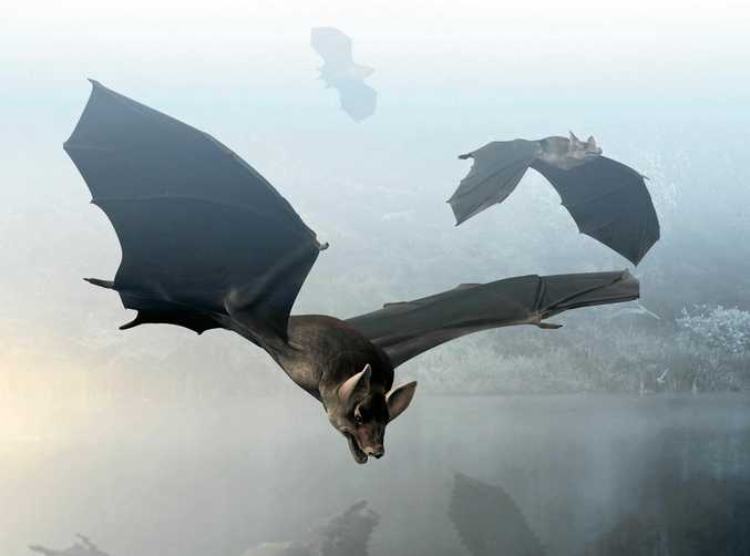 This may not be the bat that I found flying in my bedroom, but this is what I imagined in the dead of night.