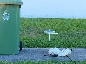 'Sadistic' bird killers leave disturbing memorial for ibis