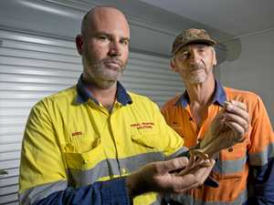 WATCH: Snake catcher's video busts deadly myth about species