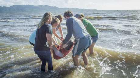 Baby dugong rescue at Pallarenda on January 7. PHOTO: ROXANA CAHA PHOTOGRAPHY