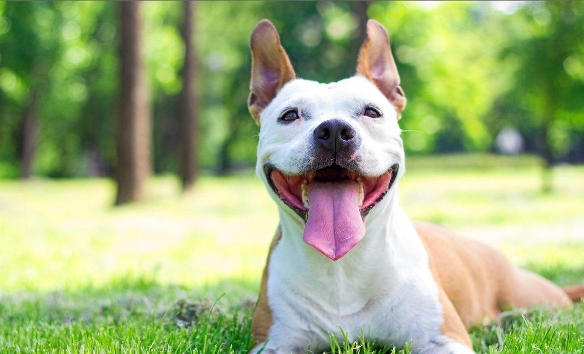 Generic dog pic, dog film, puppy, animal, happy, dog, pet.