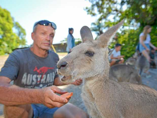 SNACK TIME: Garry McLean with one of the sanctuary's more mature charges. The kangaroos love sweet-potato treats.