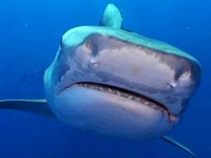 Sharks sighted lurking around swimmers at tourist hotspot
