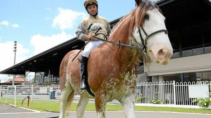 KENNY'S BACK: Quayde Krogh takes Kenny the Clydesdale for a short ride at Callaghan Park.