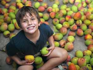 Welcome to the mango economy - opportunity ripens