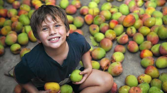 ENTERPRISE: Kayden Fleming, 8, saw an opportunity for a bright young man as Gympie region experiences a huge harvest of gorgeous, juicy mangoes. He is selling them at $6 for 15 from his family's 11 Ray Street home.