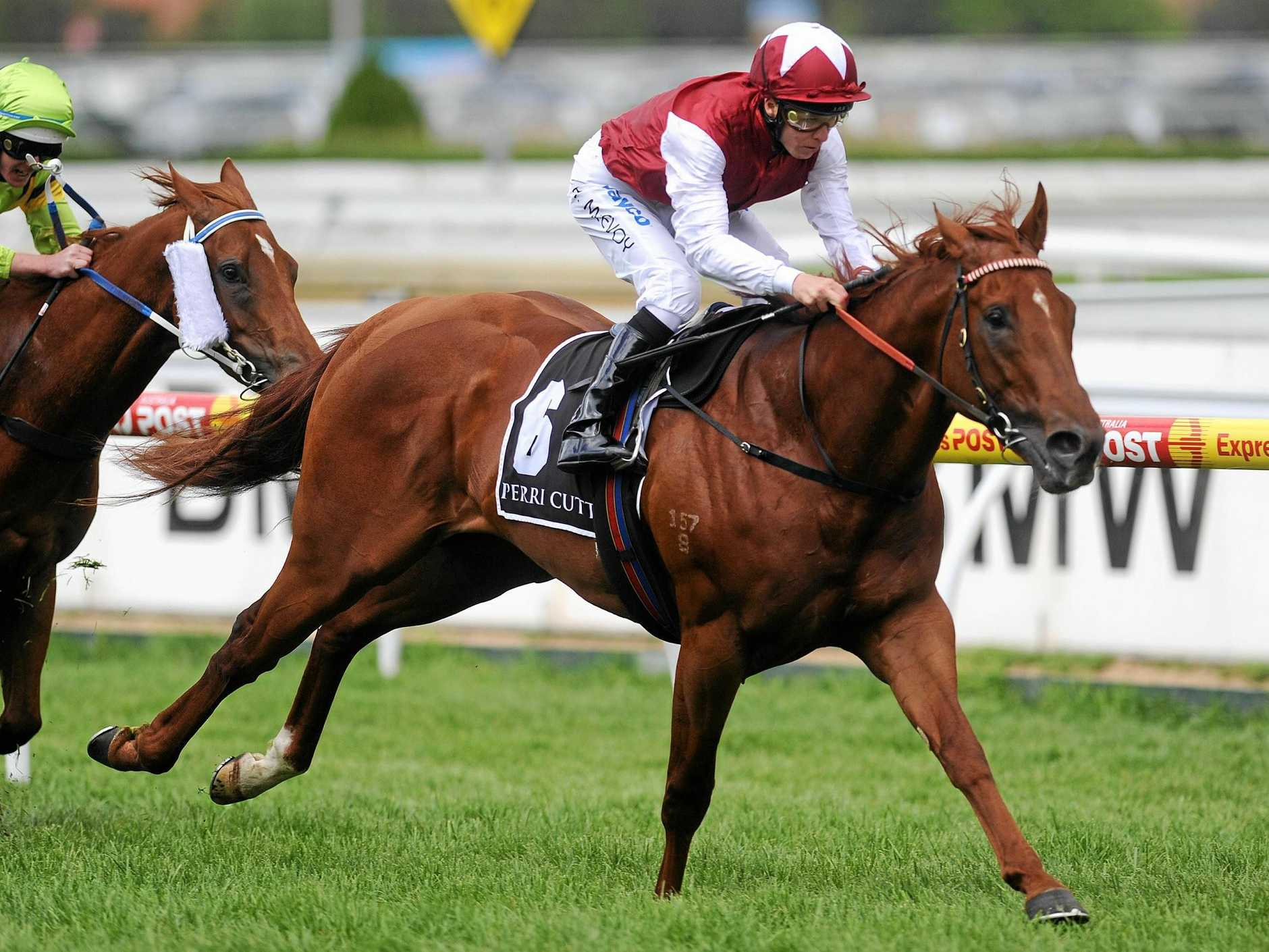 Sepoy's half brother will be up for grabs this week.