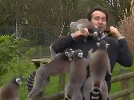 Lemurs everywhere! Picture: BBC