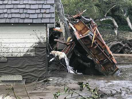 In this photo provided by Santa Barbara County Fire Department, Santa Barbara County Fire Search Dog Reilly looks for victims in damaged and destroyed homes in Montecito, Calif. following deadly runoff of mud and debris from heavy rain on Tuesday, Jan. 9, 2018.