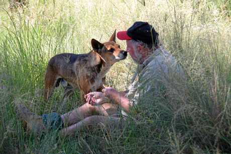 Simon Stretton at the Durong Dingo Sanctuary.