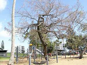 Christsen Park to get more shade upon removal of old tree