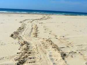 First on record: green turtle nests on one of our beaches