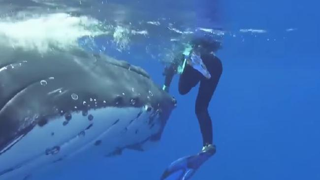 Whale saves unsuspecting woman from a tiger shark that was swimming beneath her. Picture: YouTube
