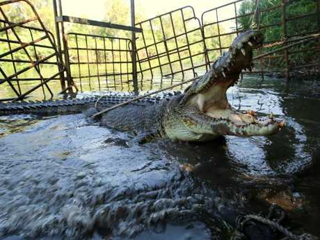 Matt Wright baits and traps crocodiles that pose a threat to people or farms in the Top End.