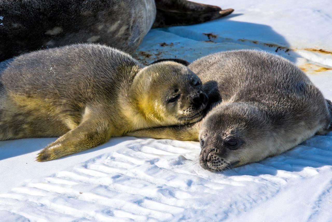 Seals at Davis Station.