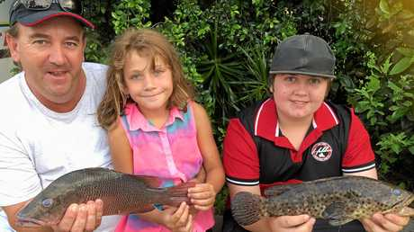 BUDDING YOUNG FISHERS: Bruce Henricks with his keen angling children, Jarvis and Gemma with a couple of feisty mangrove jack from Petrie Creek.