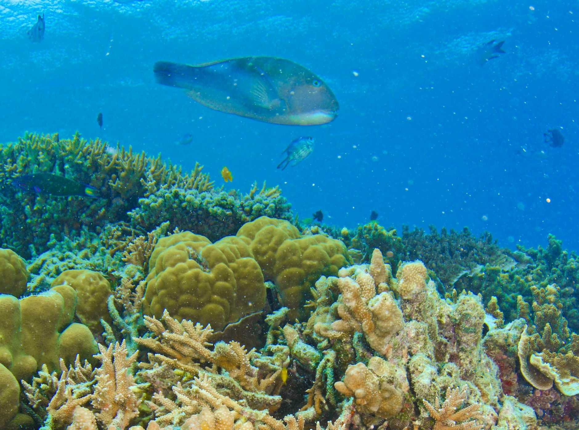 Hardy Reef on the Great Barrier Reef.