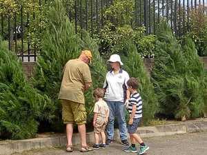 Tree-mendous fundraiser to help grandparents