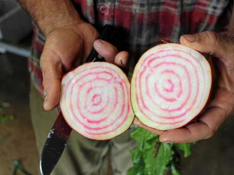 Candy striped beetroot from the symara organic farm